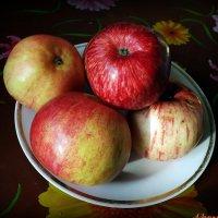 Яблочки наливные :: Андрей Заломленков