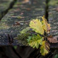 Autumn on the table :: Dmitry Ozersky