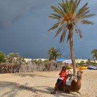 Просто так о Тунисе. :: Мила Мит
