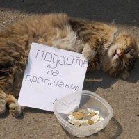 Владивосток :: Сергей Анчуткин