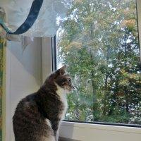 Осенняя грусть :: ivolga