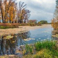 Река в октябре :: Любовь Потеряхина