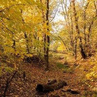 Осень :: Елена