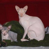 кот и кошка :: maikl falkon
