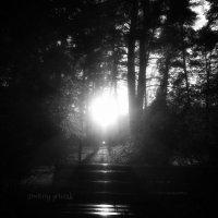 Свет солнца .... :: Дмитрий Призрак