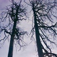 Когда деревья были большими... :: Елена