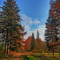 На то она и осень... :: Vladimir Semenchukov