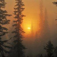 В утреннем мареве :: Сергей Чиняев