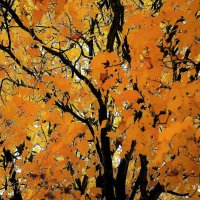 Октябрь рисует нам картины :: Валерий Розенталь