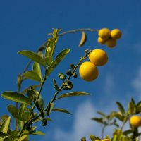 Апельсины на улицах Иерусалима :: Игорь Герман