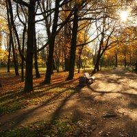 Осень в парке :: Юлия Фотолюбитель