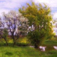красота находится рядом :: Андрей Козлов