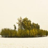 Зелёный остров :: юрий Амосов