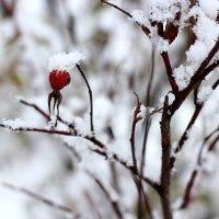 Первый снег :: Радмир Арсеньев