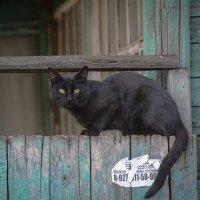 На заборе... :: Sergey Babinov
