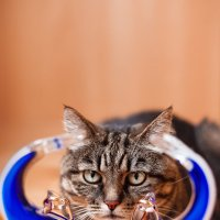 ☆ Кот и Кольца ☆ :: Studia2Angela Филюта