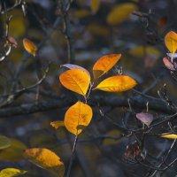 Этюд с осенними листьями :: Aнна Зарубина