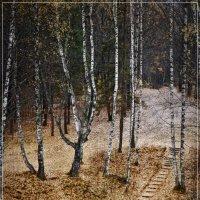 Осень :: Владимир Белозеров
