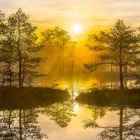Золотой туман. :: Фёдор. Лашков