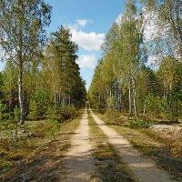 Дорога в лес! :: Андрей Буховецкий