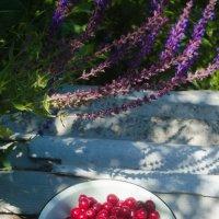 вишня, лето, урожай :: Алена Булдина