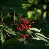 ягодки, лето :: Алена Булдина