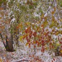 Первый снег---17 :: Владимир Холодный