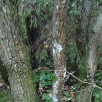 Лесной алфавит :: Maikl Smit