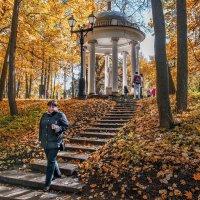 Парк так задумчиво ясен - снова врачует собой... :: Ирина Данилова