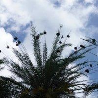 Птичьи гнезда :: Ольга Васильева