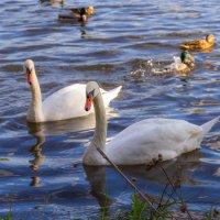 На городском озере :: Игорь Вишняков