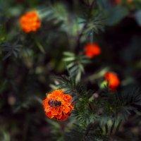 флора :: Ксения Базарова