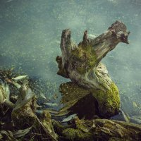 Дракончик - шутка природы :: Сергей Бурлакин