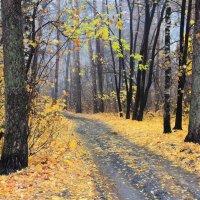 Ещё одна на свете осень... :: Лесо-Вед (Баранов)