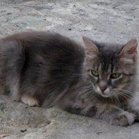 Мамаша рыжих котят :: Людмила Монахова