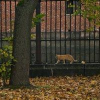 Осенний кот :: Георгий Вересов