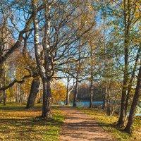 Золотая осень в парке 4 :: Виталий