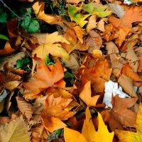Осень :: Сережка Фантом