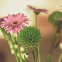 Цвеьты :: Эммль Buturlin