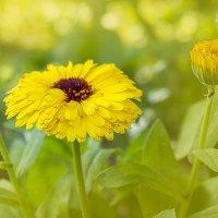 цветы :: Роман никандров
