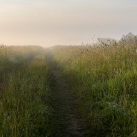 Атмосфера летнего утра :: Валентин Котляров