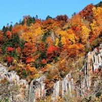 Осенние краски Хоккайдо :: Tatiana Belyatskaya