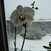 Зима пришла :: kuta75 оля оля