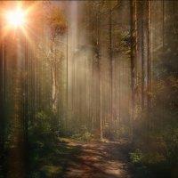 Заколдованный лес ). :: Alex Urbo