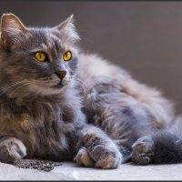 Страж храма-из серии Кошки очарование мое! :: Shmual Hava Retro