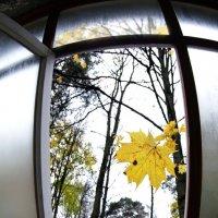 Осень :: vikvik_s Шаров