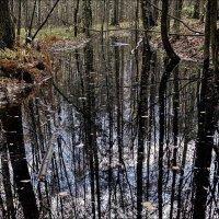 Лесное болотце :: Александр