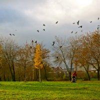 птицы в осени :: Елена