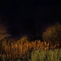 Ночь на болоте ... :: Va-Dim ...