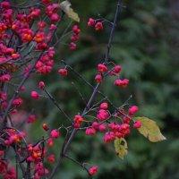 Осенние цветы :: Роман Воронежский